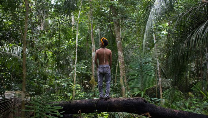 Brasil: Defesa da Amazónia é uma missão de todos