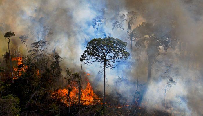 Brasil: Crescente desflorestação na Amazónia é fruto das políticas de Bolsonaro